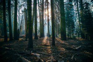 Bos sjamanisme nature quest